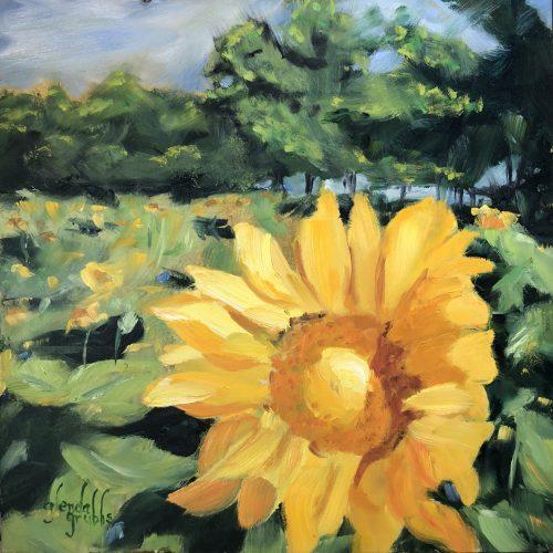 Sunflowers in a Field of Dream
